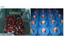 Strawberry Process