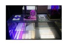 DGI LED Module (DLM)