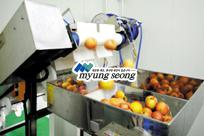 Fruit Juice Extraction Line