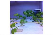 Plants growth Data Comparison