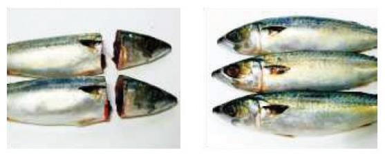(주)그랜드벨 생선 헤드 / 꼬리 절단 기계 GB160
