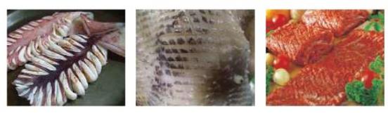 (주)그랜드벨 갈비 / 오징어 칼집 기계 (솔방울기계) GB150