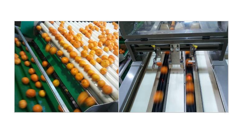 Tangerine  details